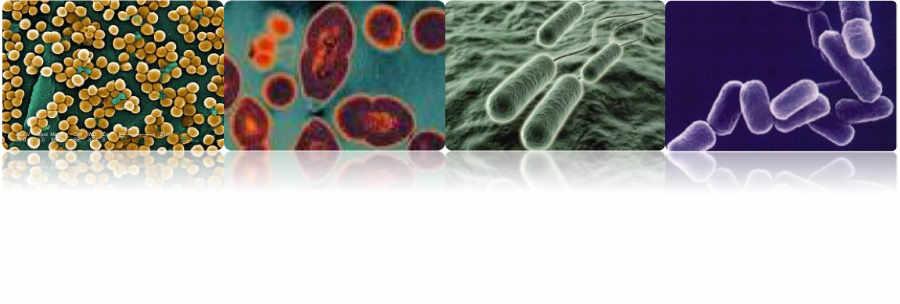 Diferentes bacterias responsables de la infección periprotésica: Staphylococcus aureus, Enterococcus, Escherichia coli y Klebsiella kneumonie